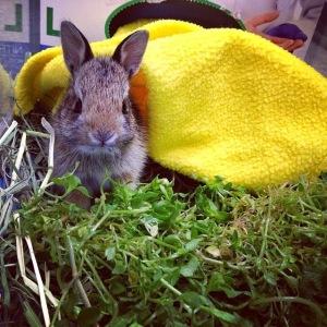 dd5f8-bunny14