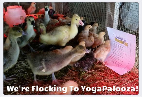 we are flocking to yogapalooza