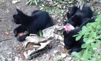 mealtime-for-bears