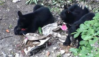 mealtime-for-bears2