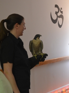 amanda-and-maggie-the-peregrine